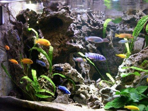 Filtrering af akvarie